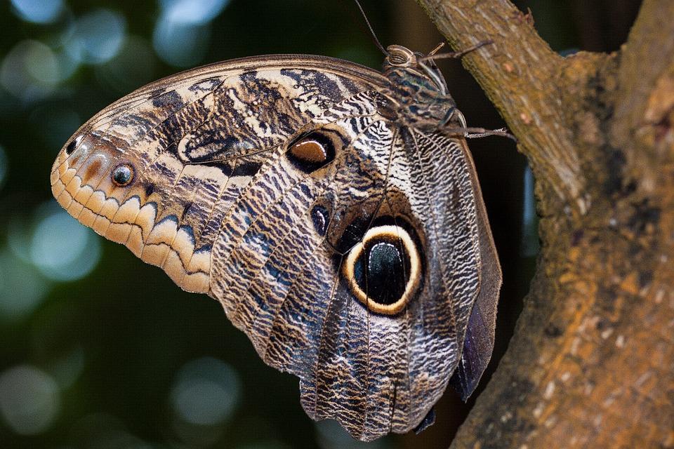 bobiri vlinder